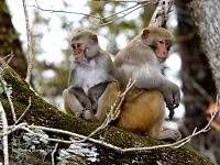 Silver River Monkeys