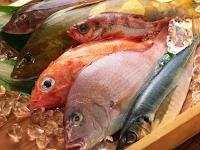 5 Jenis Ikan Kerapu Termahal Per Kilonya (Kg)
