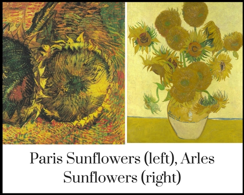 The Difference Between Them Is Quite Easy To Notice Paris Sunflowers Have A More Darker Colour Scheme And They Are Cut Flowers Lying On Ground