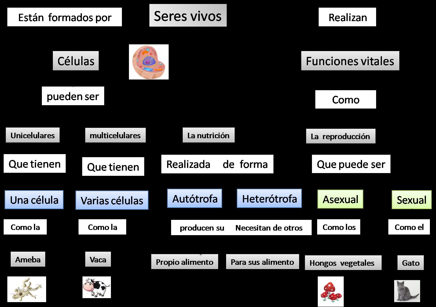 Elementos del mapa conceptual yahoo dating 5