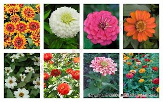 Macam-Macam Bunga Yang Populer di Indonesia
