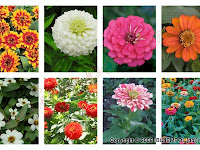Macam Macam Bunga Yang Populer di Indonesia Beserta Gambarnya