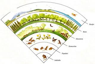 Soal Biologi : Keanekaragaman Hayati (40 Soal Pilgan + Jawaban Lengkap)