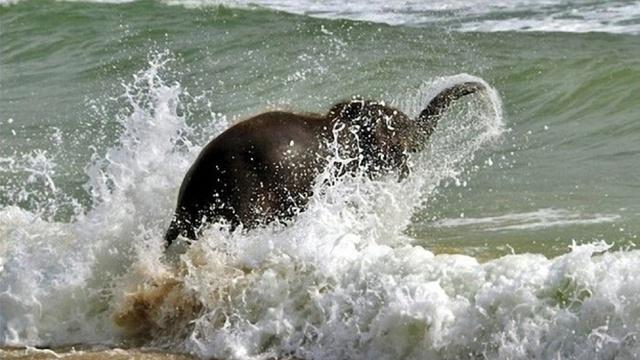 Elephant Surf Baby