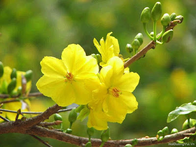 Kinds of Flower for Tet holiday in Viet Nam