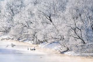 arboles-cubiertos-de-hielo