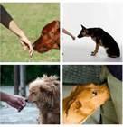 Usted puede pensar que esto significa que es un perro amistoso, porque la cola está meneando, pero eso no es siempre el caso. Los perros también mueven la cola  cuando están nerviosos