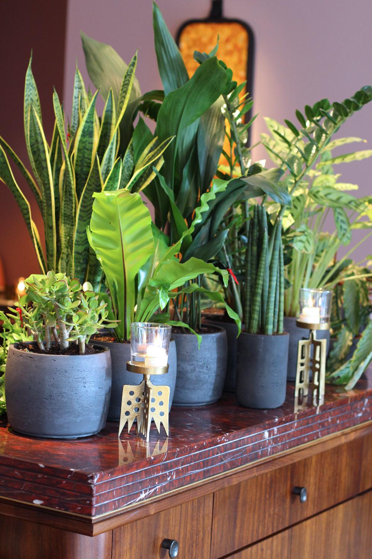 Plants at Mexican Restaurant Ella Canta at Park Lane Intercontinental, London - UK lifestyle blog