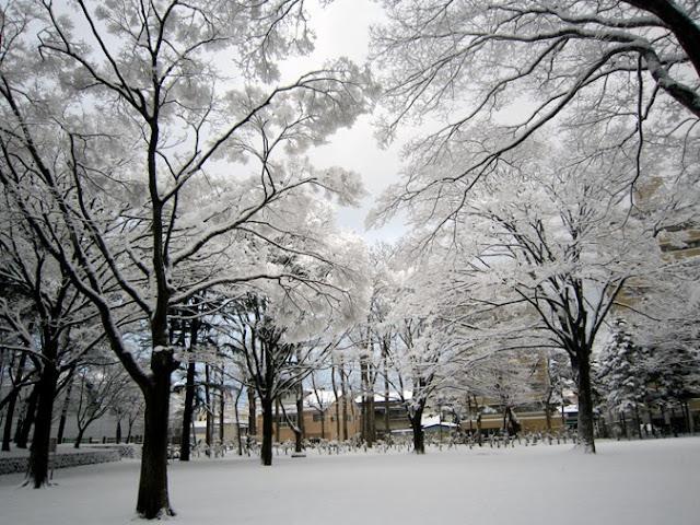 青空と雪の花