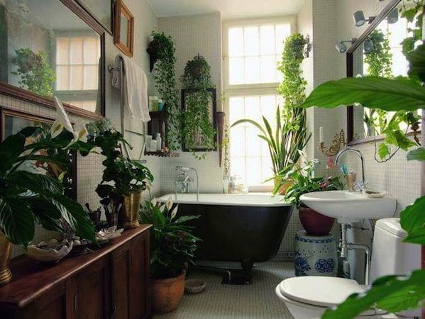 gambar tanaman hias walk in closet