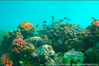 Snorkeling tour with Charles Roring in West Papua