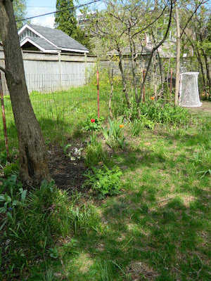 Toronto Riverdale Spring Cleanup Backyard Garden Before by Paul Jung Gardening Services--a Toronto Gardening Company