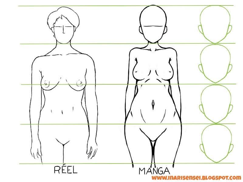 Propotion et différences des seins entre un manga et une personne réelle