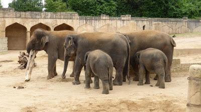 Teks diskusi dikandangkan atau dibebaskan haruskah hewan dipelihara di kebun binatang