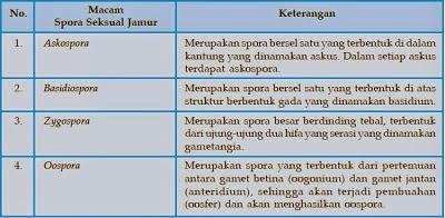 Ciri-Ciri Morfologi dan Fisiologi Jamur
