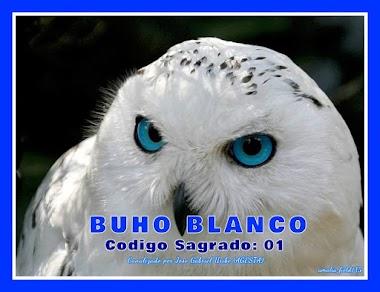 MENSAJE DEL BÚHO BLANCO,YO TE HARÉ JUSTICIA
