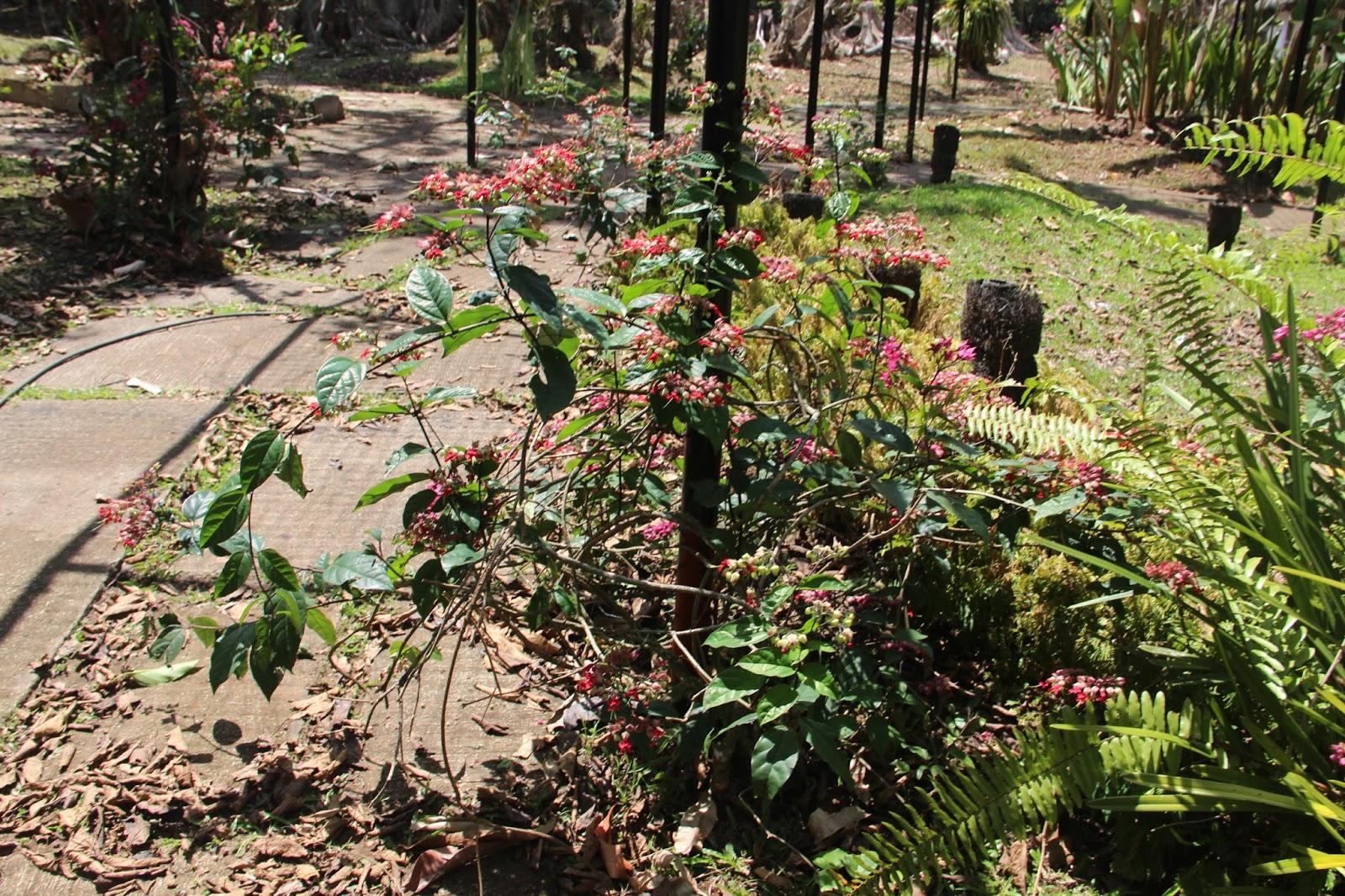 maisocalledlife: DISCOVERING DAVAO-Day 4: Malagos Garden Resort