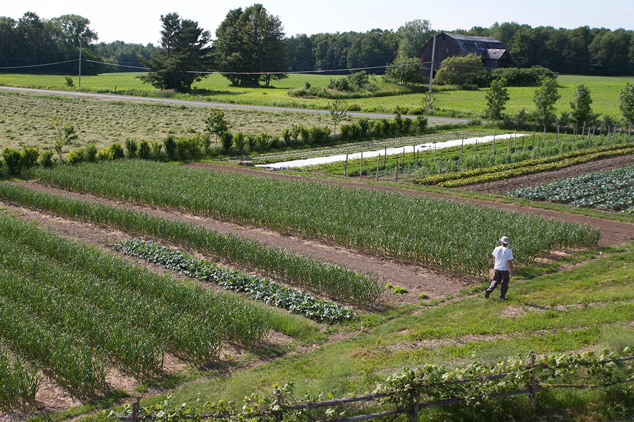 The Deliberate Agrarian: Farming 1.5 AcresAnd Making A ...
