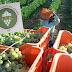 Πρωτοφανής έξαρση της παραοικονομίας και ολοκληρωτική απαξίωση των αμπελουργών και στα Μεσόγεια, λόγω του ΕΦΚ στο κρασί!