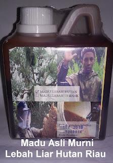 Jual Khasiat manfaat madu murni asli lebah liar hutan riau original