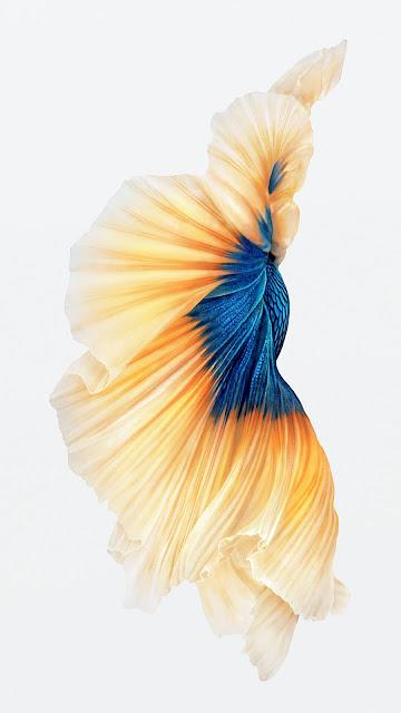 Hình nền 3D cá lia thia đẹp cho iPhone 7 Plus