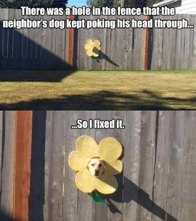 Dog fence meme