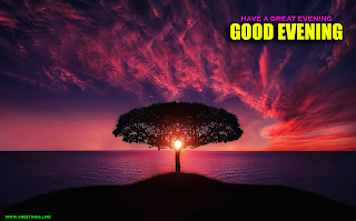Best Creative Greetings on Sunset time.Beautiful Sunset on tree amazing Evening Greetings.