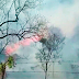 Fogo destrói 15 hectares de área de mata e cana em Santa Rita