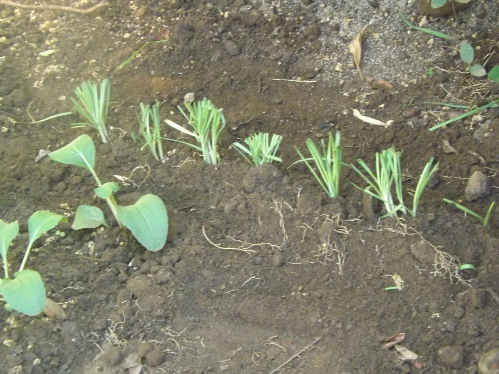 De la terre na t notre richesse entretien du jardin les for Entretien jardin decembre