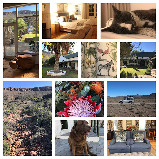Cat and dog and interior design of Lemoen Fontein in Beaufort West
