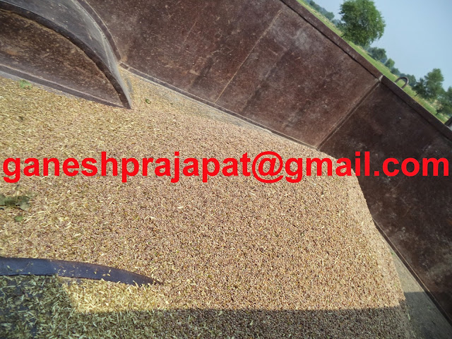 Guar and guar gum weakened with falling  crude oil price, Guar, guar gum, Guar gum price, Guar gum export,  guar gum news, NCDEX guar gum price, Guar gum report, guar seed production, guar gum consultant, guar seed export, guar gum export from india 2017-2018 , guar, guar gum, guar gum news, Guar gum export-2017-2018, Guar gum export-from India during 2017-2018, Guar gum export data -2017-2018, Guar gum rate , NCDEX guar gum price,  guar gum export-2017, guar gum export-2018, guar gum demand-2017, guar gum demand-2018, guar gum production, guar gum cultivation, guar gum cultivation consultancy, Guar, guar gum, guar price, guar gum price, guar demand, guar gum demand guar seed production, guar seed stock, guar seed consumption, guar gum cultivation, guar gum cultivation in india, Guar gum farming, guar gum export from india, Fundamentally Guar seed and guar gum are very strong , Guar, guar gum, guar price, guar gum price, guar demand, guar gum demand, guar seed production, guar seed stock, guar seed consumption, guar gum cultivation, guar gum cultivation in india, Guar gum farming, guar gum export from india , guar seed export, guar gum export, guar gum farming, guar gum cultivation consultancy, today guar price, today guar gum price, ग्वार, ग्वार गम, ग्वार मांग, ग्वार गम निर्यात 2018-2019, ग्वार गम निर्यात -2019, ग्वार उत्पादन, ग्वार कीमत, ग्वार गम मांग, Guar Gum