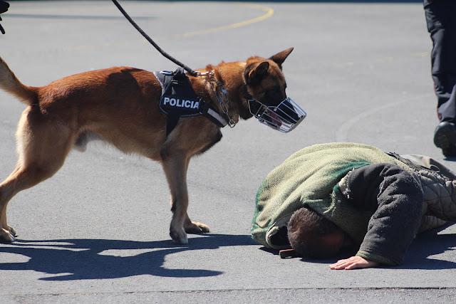 Exhibición de los perro policía de Barakaldo