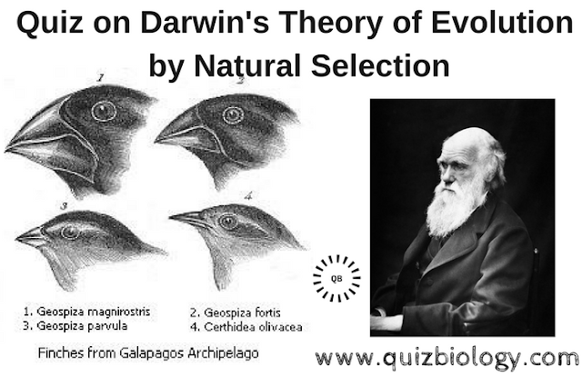 Quiz on Darwin's Theory of Evolution by Natural Selection