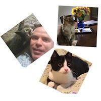 Cats - Fauna, Echo, Poptart