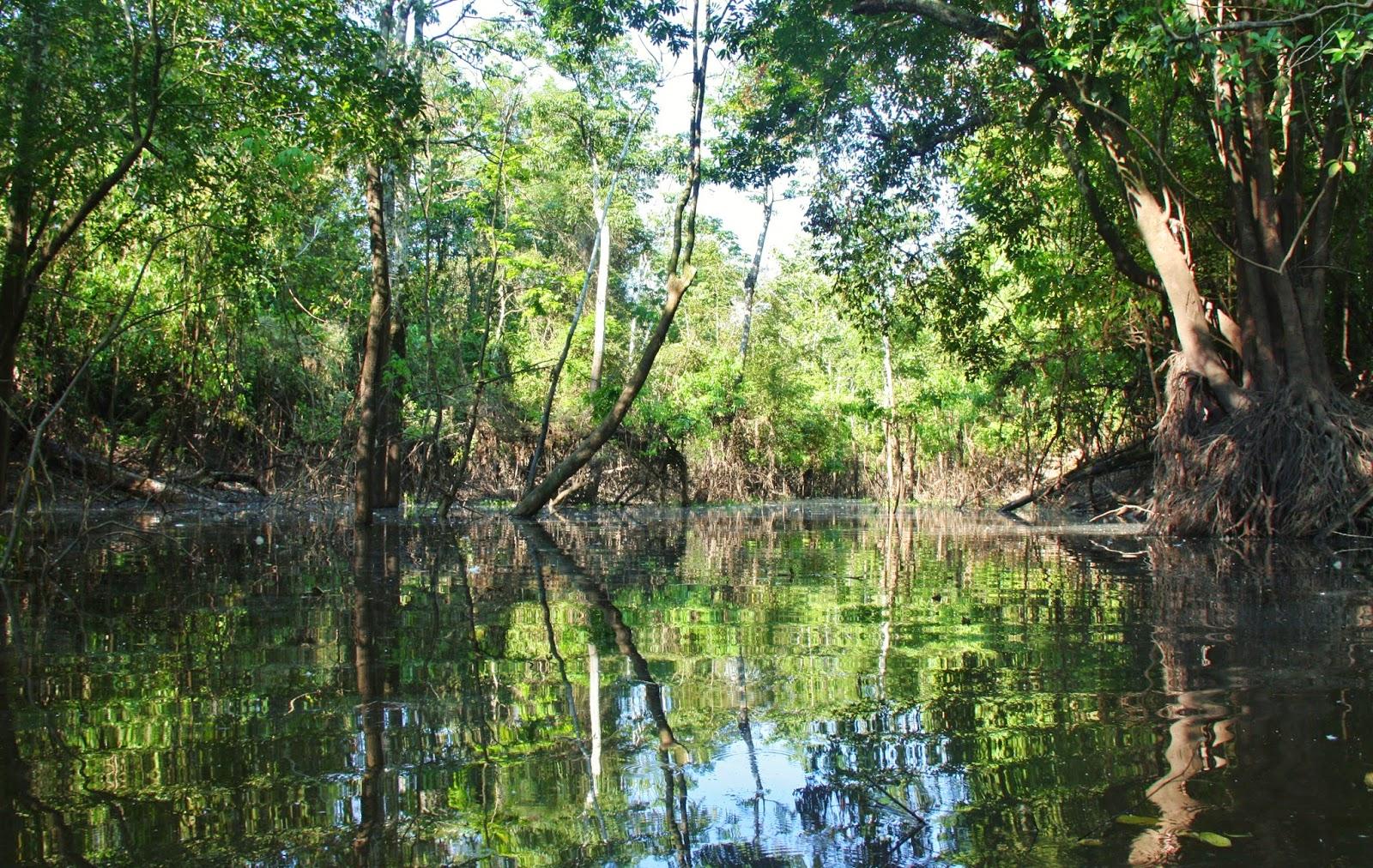 Passeio de canoa pelo Rio Japurá