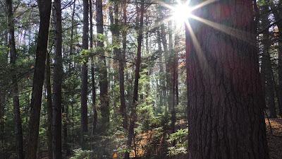 Mt Tom's mature forest habitat
