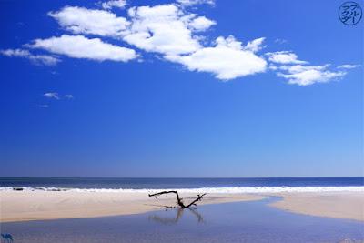 Le Chameau Bleu - Blog Voyage Patchogue et Fire Island - Escapade dans Long Island