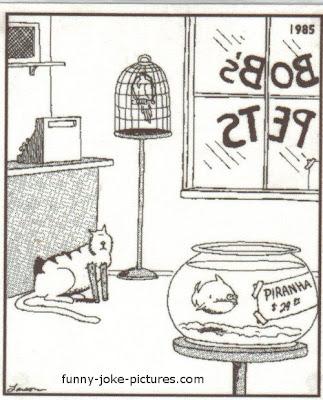 Funny Piranha Fish Cat Legs Cartoon | Funny Joke Meme Pictures