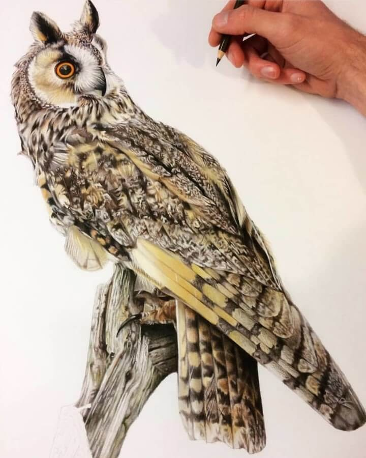 05-Owl-Tom-Strutton-Animal-Drawings-www-designstack-co