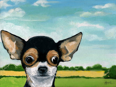 http://www.applearts.com/content/whats-going-chihuahua-dog-portrait