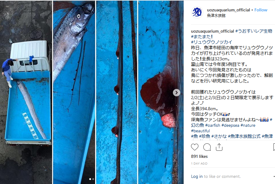 Earthquake Prediction: Sightings of rare oarfish in Japan