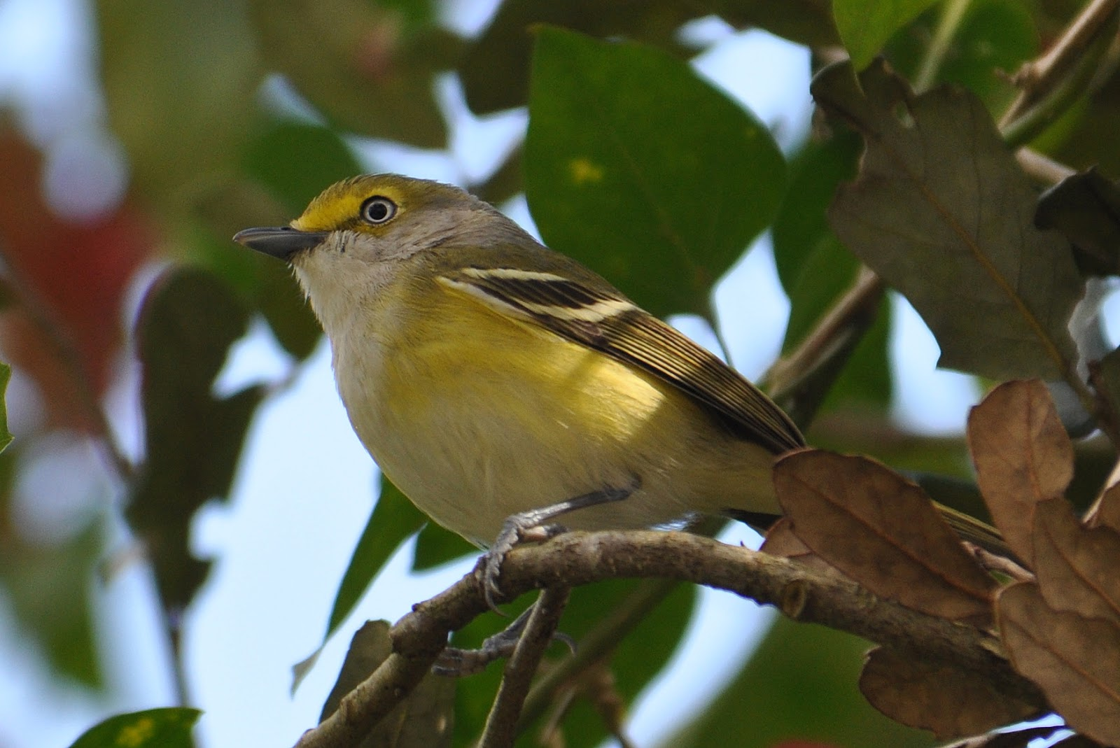 Birding With Mike And Corinne April