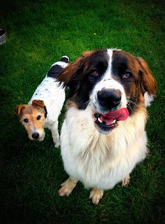 Hundefreundschaften