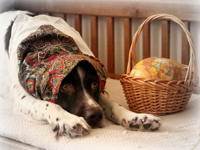 hund påskkärring