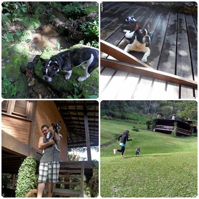 Pousada em Visconde de Mauá que aceita cachorro. Hotel com cachorro, viagem com cachorro, hotel pet friendly.