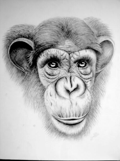 10-Chimpanzee-Kelly-Six-www-designstack-co