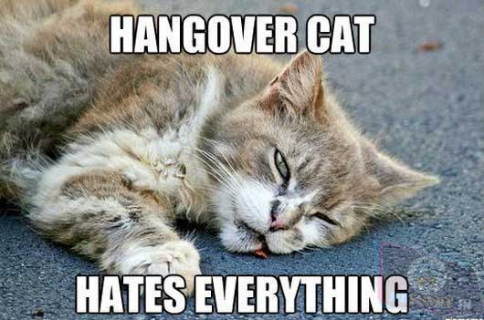 The hangover cat, hates everything