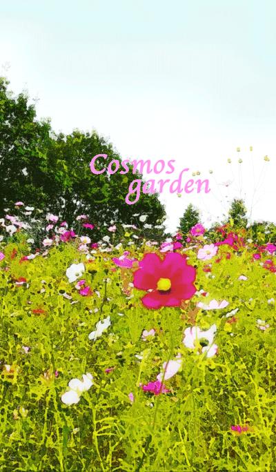Cosmos garden