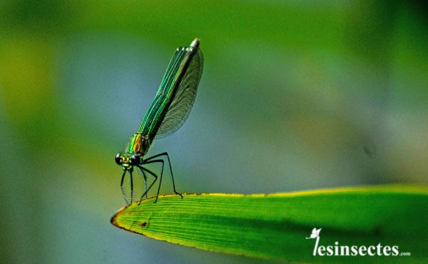 Qu'est-ce qu'un insecte?