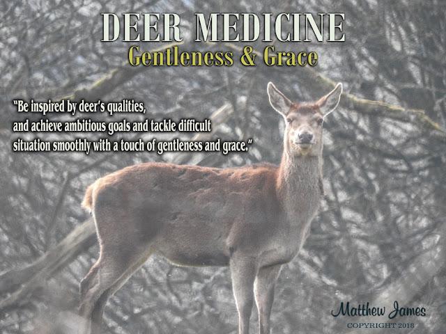 deer totem meaning